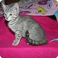 Adopt A Pet :: Annabelle - Santa Rosa, CA