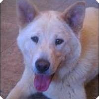 Adopt A Pet :: Rosie - Lake Forest, CA