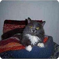 Adopt A Pet :: Sabrina - Proctor, MN