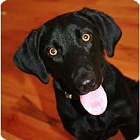 Adopt A Pet :: Lily - Pending! - kennebunkport, ME