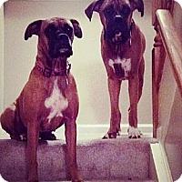 Adopt A Pet :: Lexi - Sunderland, MA