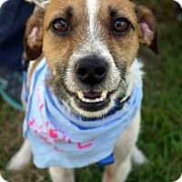 Adopt A Pet :: Petey - Baton Rouge, LA