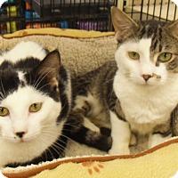 Adopt A Pet :: Calvin and Levi - Bear, DE