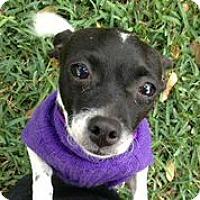 Adopt A Pet :: Andi - Austin, TX