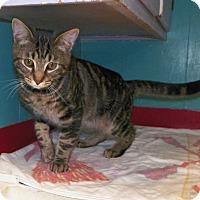Adopt A Pet :: Todd - Dover, OH