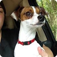 Adopt A Pet :: Oliver - Gainesville, FL