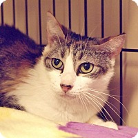 Adopt A Pet :: Charlotte - Ocean City, NJ