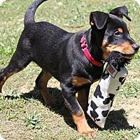 Adopt A Pet :: Bruno - Winters, CA