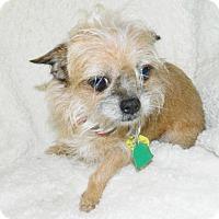 Adopt A Pet :: Chelsea - Umatilla, FL
