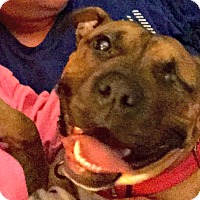 Adopt A Pet :: Roxy - Indianapolis, IN