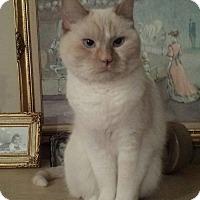 Adopt A Pet :: Josie and Moe - Pinckney, MI
