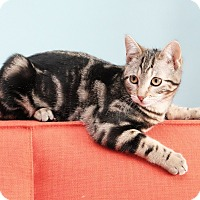 Adopt A Pet :: Olive - Brooklyn, NY