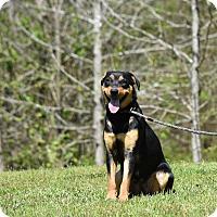 Adopt A Pet :: Jenny G - Groton, MA