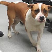 Adopt A Pet :: Buttercup - Lincolnton, NC
