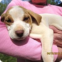 Adopt A Pet :: Mavis - Lincolndale, NY