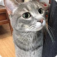 Adopt A Pet :: Lulu - Manchester, MO