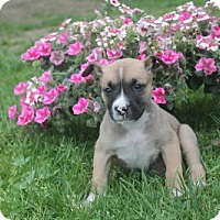 Adopt A Pet :: Grant - Newark, DE