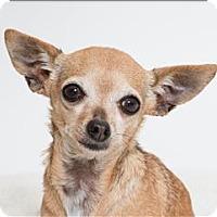 Adopt A Pet :: Paprika - San Luis Obispo, CA