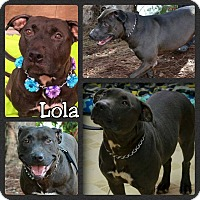 Pit Bull Terrier Mix Dog for adoption in Miami, Florida - Lola