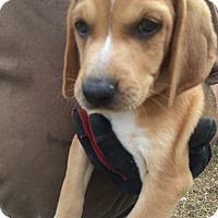 Adopt A Pet :: Lenny - Hohenwald, TN
