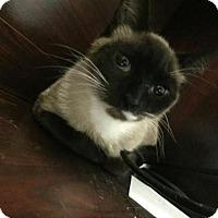 Adopt A Pet :: Lady M - Pensacola, FL