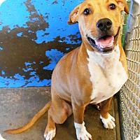Adopt A Pet :: Chewy - Redding, CA