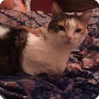 Adopt A Pet :: Kitty Kat - Wasilla, AK