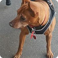 Adopt A Pet :: Cassidy - Ogden, UT