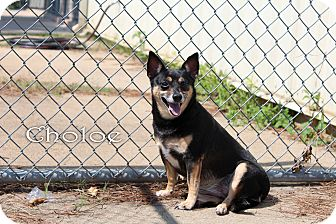 Terrier (Unknown Type, Small) Mix Dog for adoption in Texarkana, Arkansas - Choloe