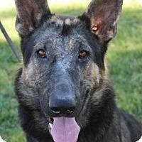Adopt A Pet :: TRAVIS - Red Bluff, CA