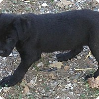 Adopt A Pet :: Linley - Trenton, NJ