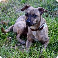 Adopt A Pet :: Dex - Des Moines, IA