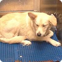 Adopt A Pet :: Luna - Providence, RI