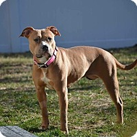 Adopt A Pet :: Dutchess - Brookhaven, NY