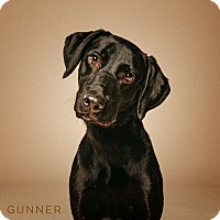 Adopt A Pet :: Gunner - Houston, TX