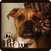 Adopt A Pet :: Titan - Des Moines, IA