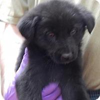 Adopt A Pet :: Brady - Pikeville, KY