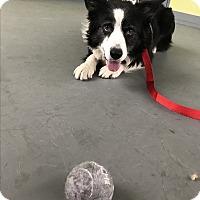 Adopt A Pet :: CANDY - San Pedro, CA