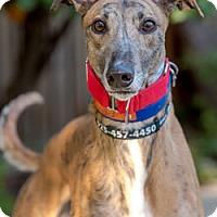 Adopt A Pet :: Paul - Walnut Creek, CA