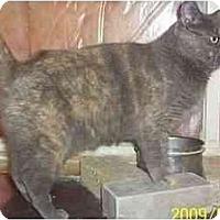 Adopt A Pet :: MEREETA - Nepean, ON