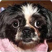 Adopt A Pet :: Lacy-NJ - Mays Landing, NJ