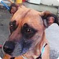 Adopt A Pet :: Tucker - Andrew, IA