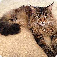 Adopt A Pet :: Solomon - Davis, CA