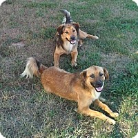 Adopt A Pet :: Abbie and Tucker - Staunton, VA