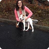 Adopt A Pet :: Rudy - Woodbridge, CT