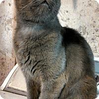 Adopt A Pet :: Bing - Hamden, CT