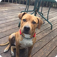 Adopt A Pet :: SCOOBY - Pittsburgh, PA