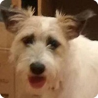 Adopt A Pet :: Bella - MINNEAPOLIS, KS