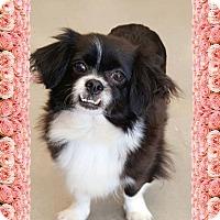 Adopt A Pet :: Angel Whitney - Barnesville, GA