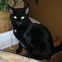 Adopt A Pet :: Gabby - Asheville, NC